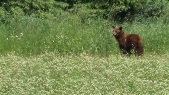 2017-06-11 Enderby_Whispering Pines-23