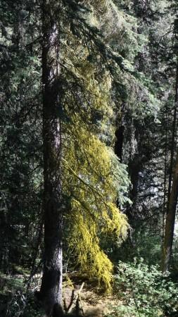 2017-06-27 Johnston Canyon-62