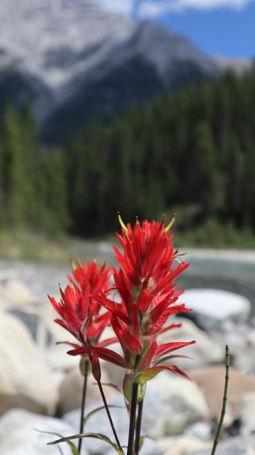2017-06-30 GDV Banff_Spray lake-62