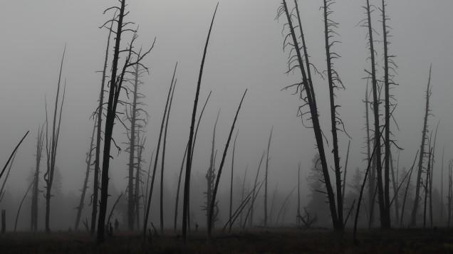 2017-08-10 Yellowstone-176
