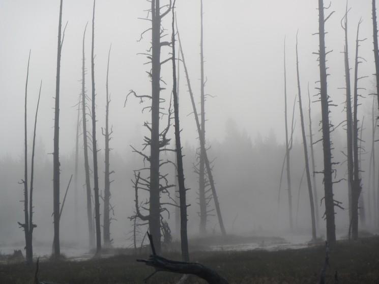 2017-08-10 Yellowstone-34