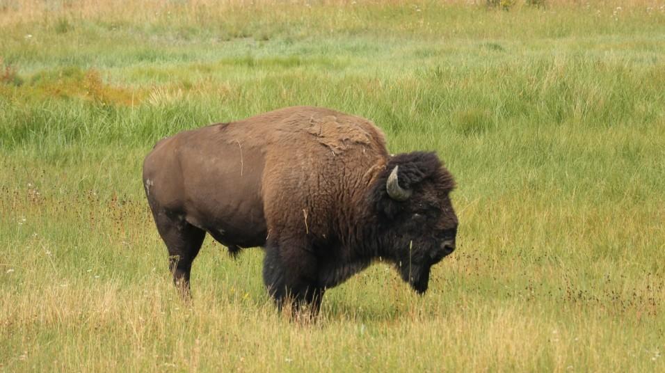 2017-08-11 Yellowstone-444