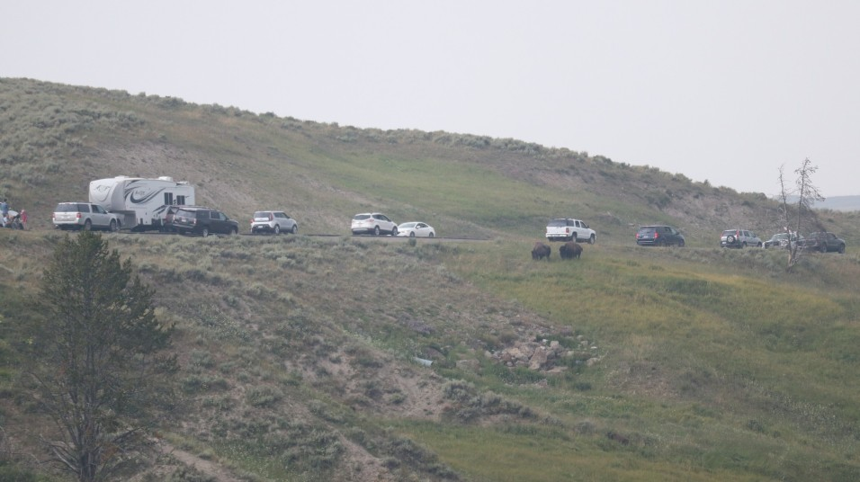 2017-08-11 Yellowstone-469
