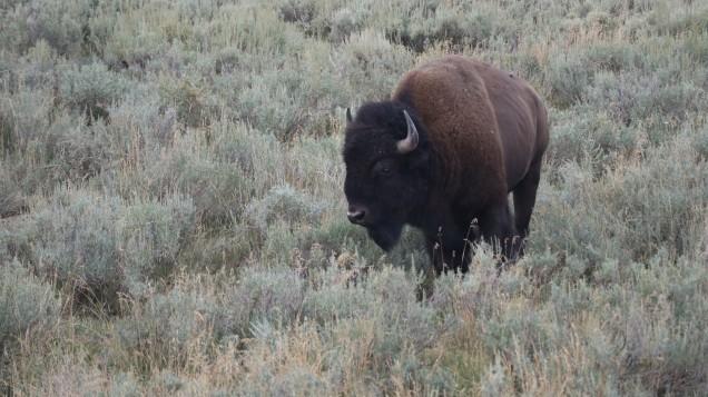 2017-08-11 Yellowstone-495