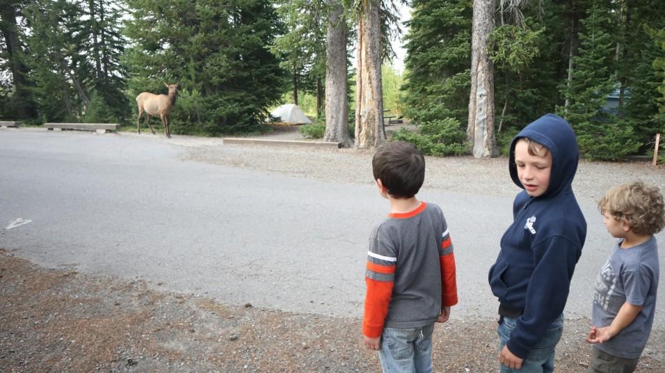 2017-08-12 West Yellowstone_Grant Village-79