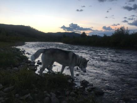 2017-08-15 Jackson Hole_Elkhorn-17