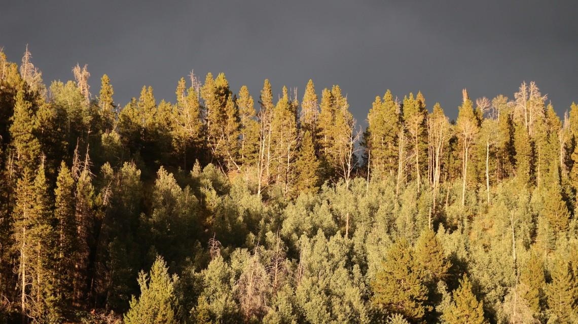 2017-08-23 Teton Reservoir_Aspen Alley-100