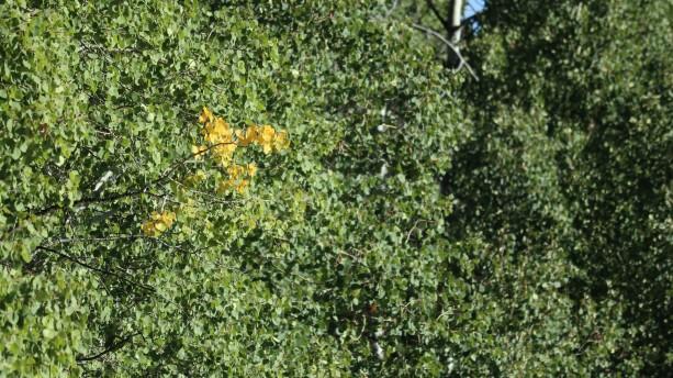 2017-08-24 Aspen Alley_Brush Mtn Lodge-56