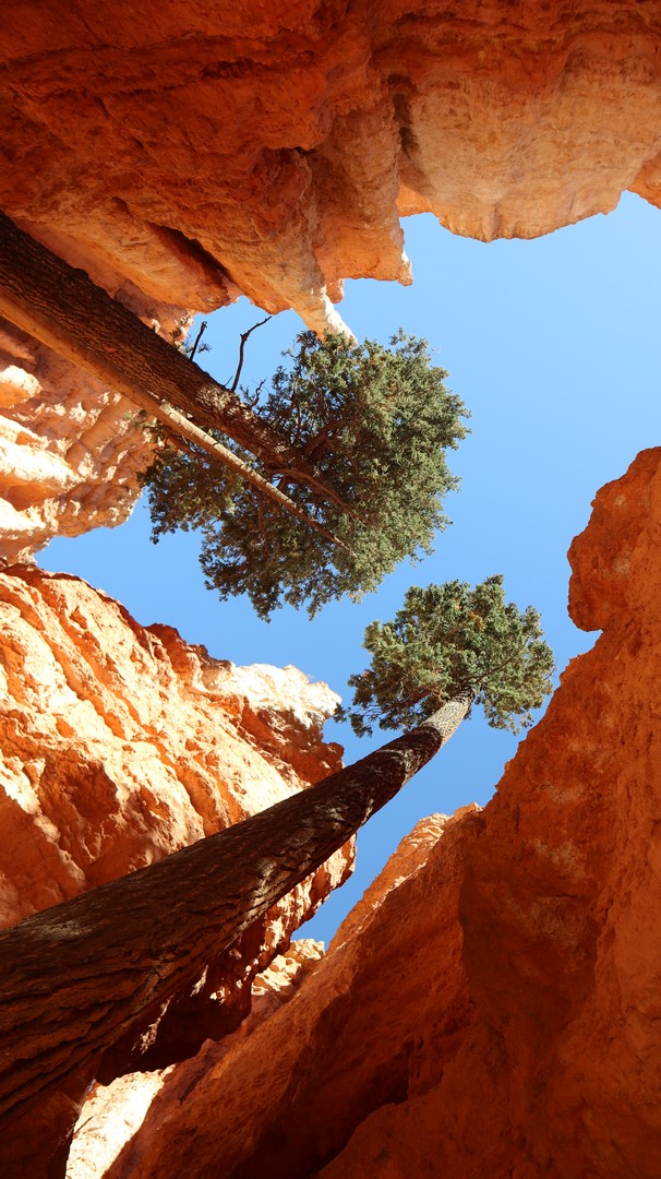 2017-10-07 Bryce Canyon-190