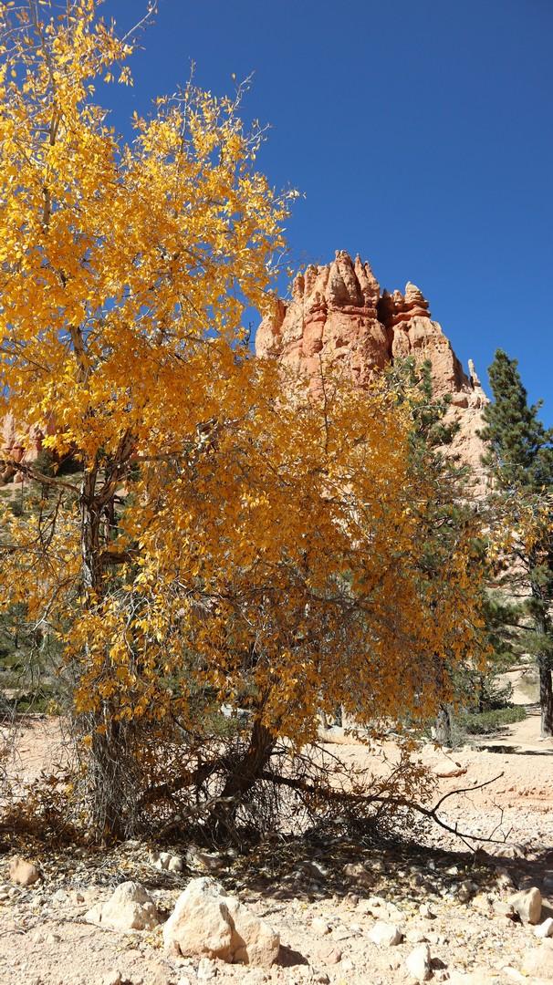 2017-10-07 Bryce Canyon-208