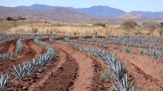 2018-02-25 Tequila_Guadalajara SUNDAY-15