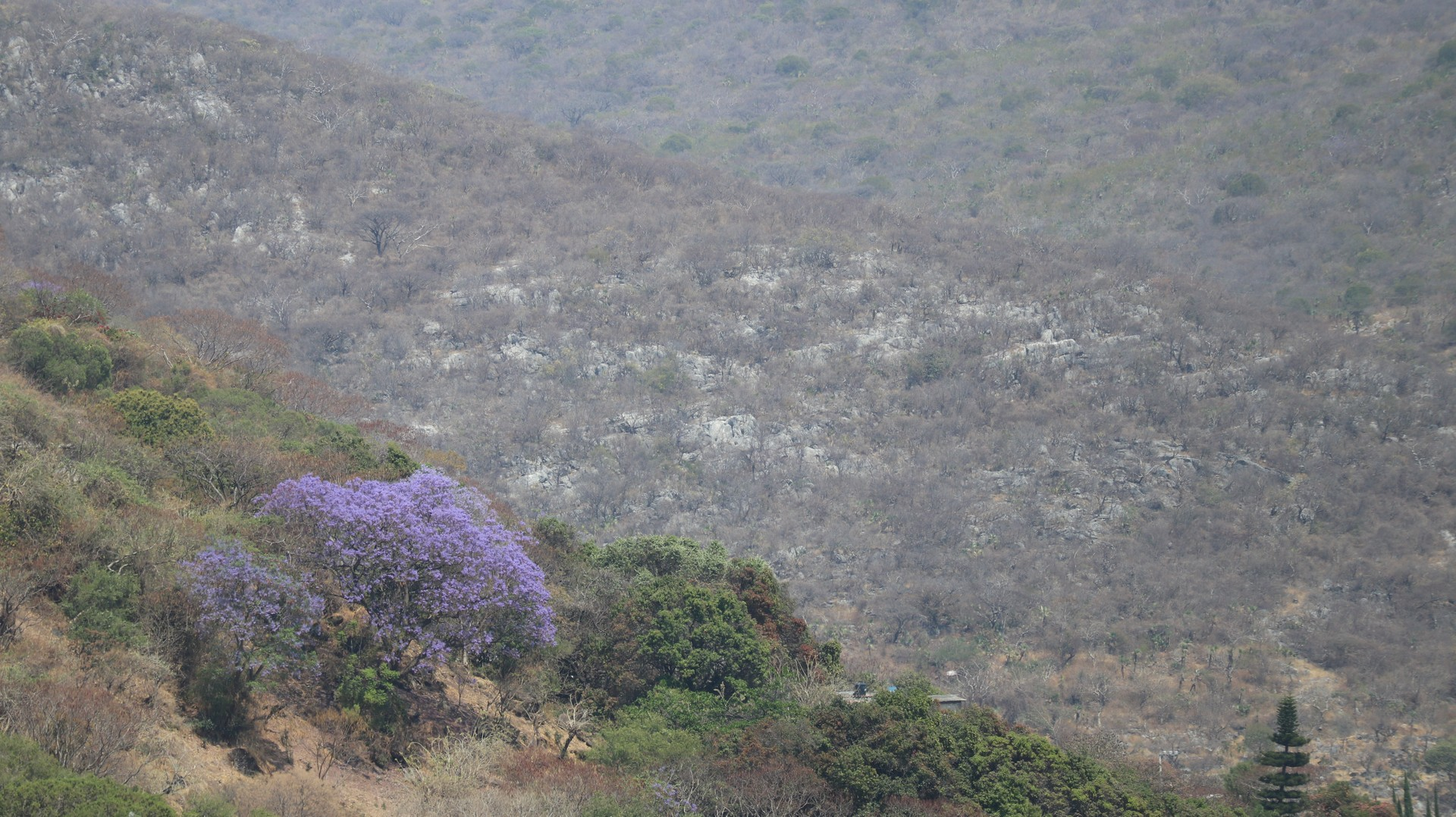 2018-03-12 Cacahuamilpa_Taxco-28