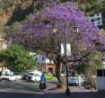 2018-03-14 Taxco_Tlaltizapan-68 (2)