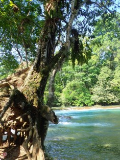 2018-04-18 San Cris (Palenque)-162