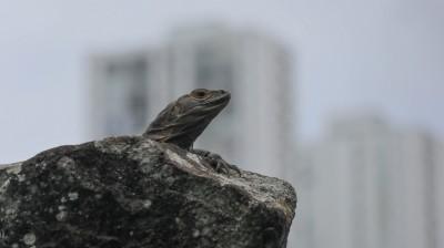 2018-07-17 Panama City-14