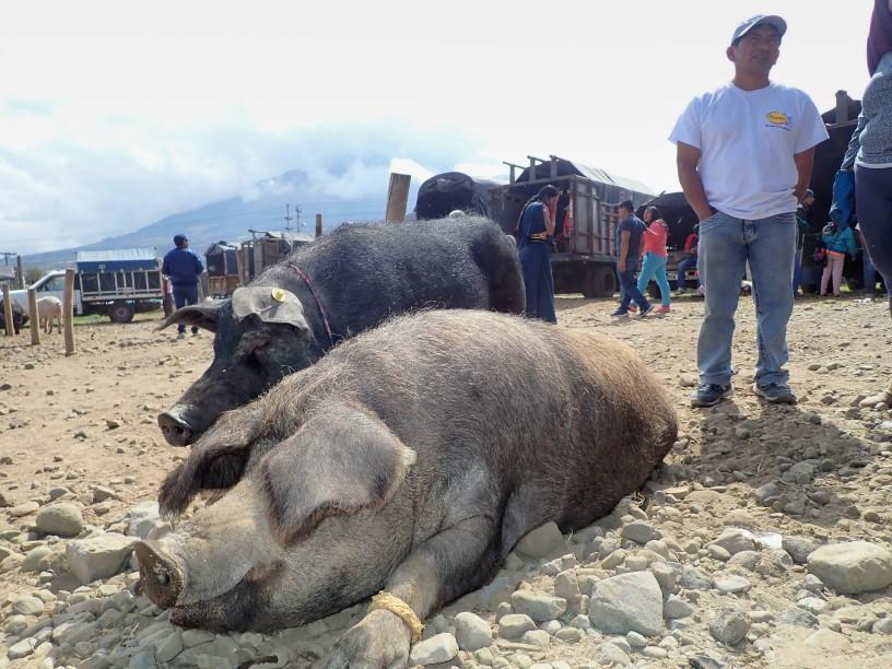 2018-10-06 Otavalo-184