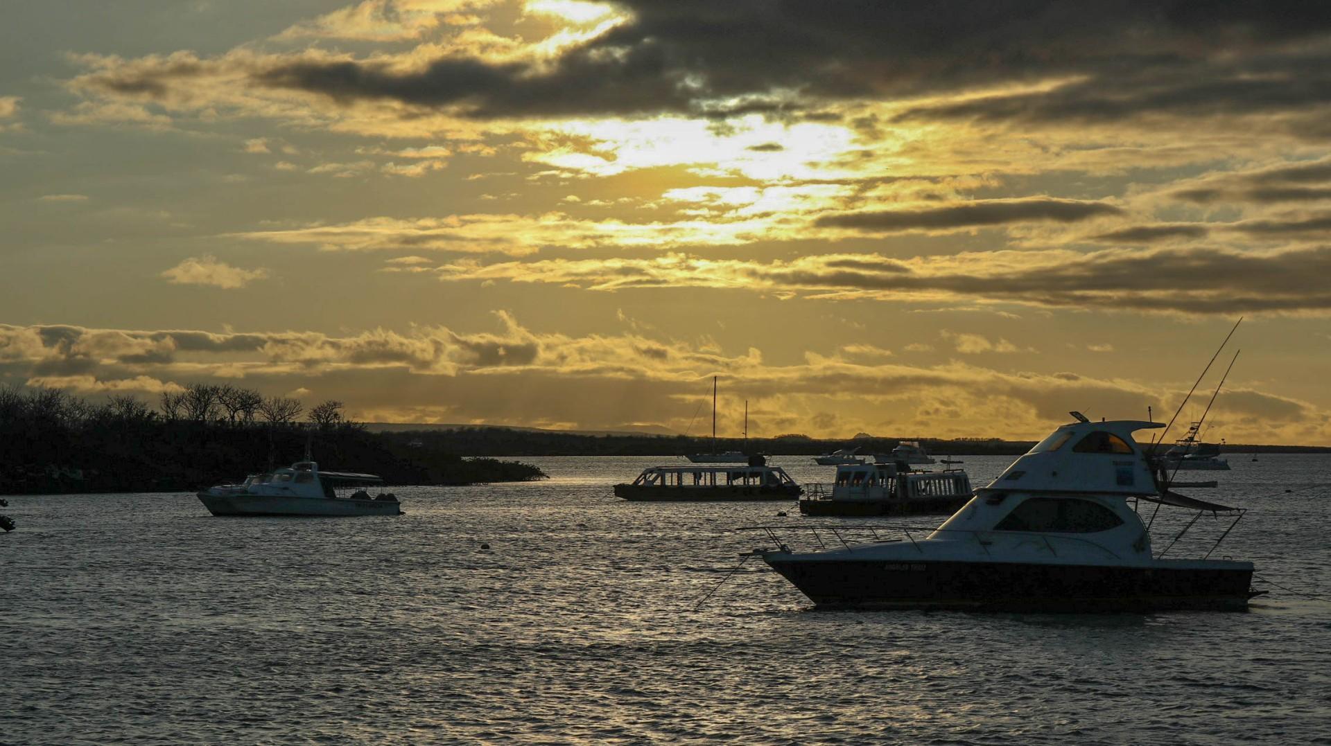 2018-11-08 Isla North Seymour-266