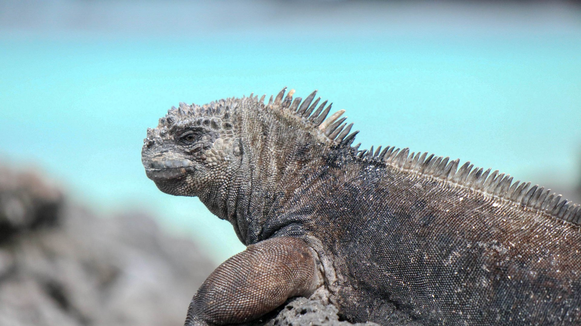 2018-11-10 Isla Lobos-51