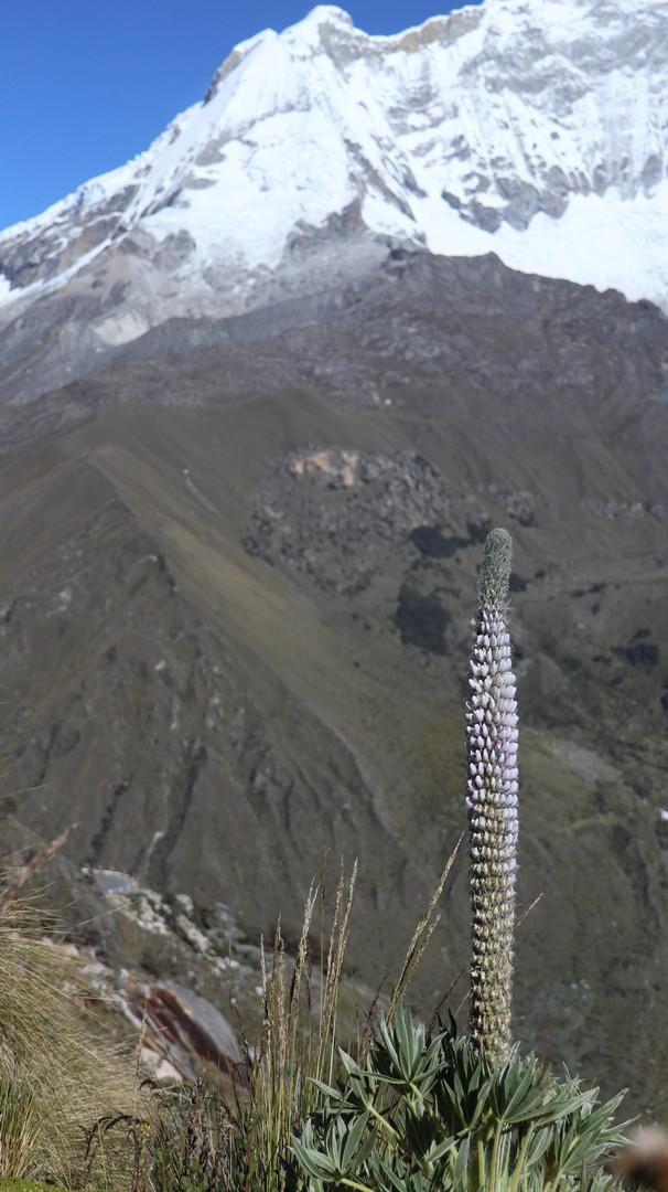 2019-05-17 Punta Olympica_Huaraz-108